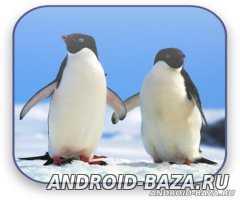 Живые обои Пингвины Живые Видео Обои