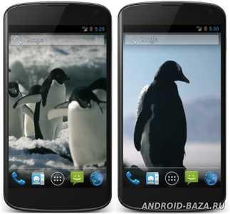 Пингвины Живые Видео Обои на телефон