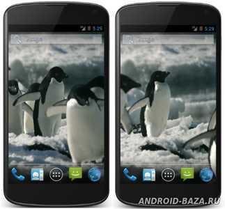 Пингвины Живые Видео Обои на планшет