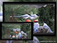 4K Garden Birds Video Live Wallpaper скриншот 3
