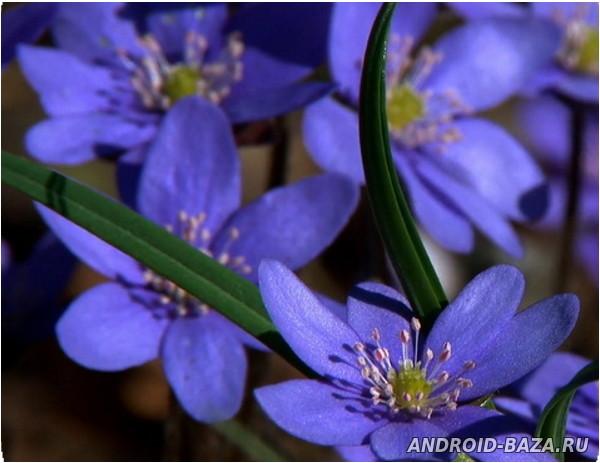 Лесные цветы - видео обои