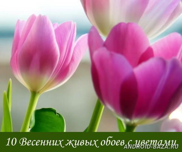 10 весенних обоев с цветами
