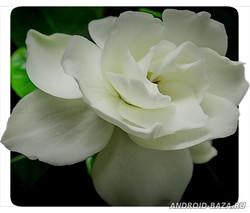 Распускающиеся Цветы 4К Видео Обои