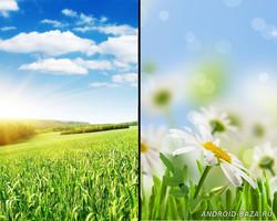 Весенние цветы - живые обои