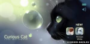 Живые обои Curious Cat Live Wallpaper — Живые Обои с Кошкой