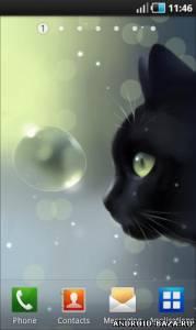 Curious Cat Live Wallpaper — Живые Обои с Кошкой на телефон