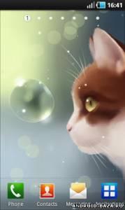 Curious Cat Live Wallpaper — Живые Обои с Кошкой на планшет