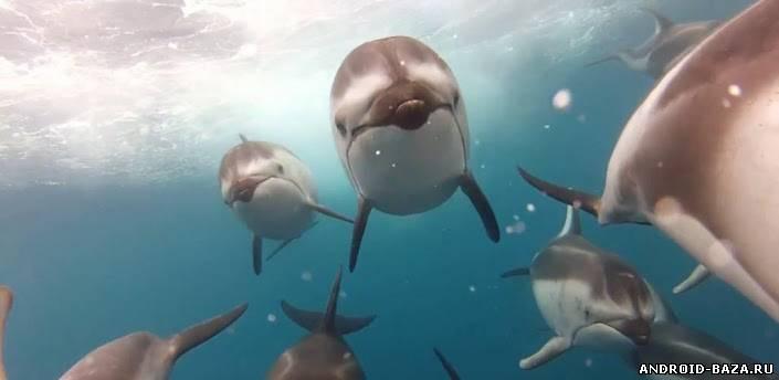 Дельфины. HD видео обои Скриншот