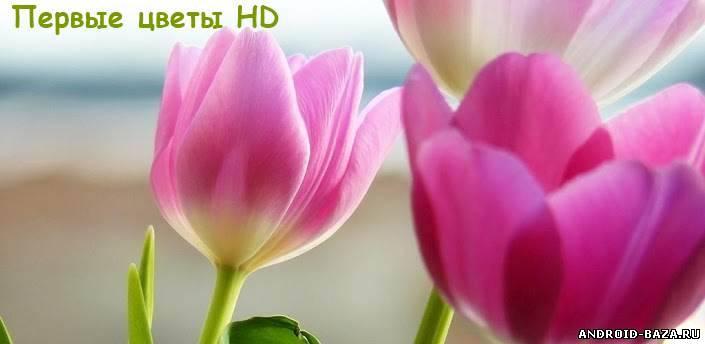 Первые цветы HD