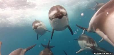 Дельфины. HD видео обои. Скриншот 1