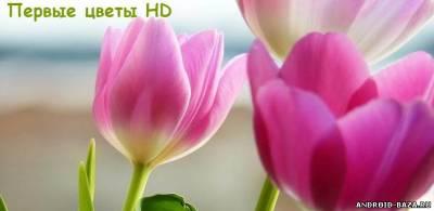 Первые цветы HD 1