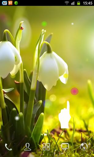 Картинка White Flowers HD Wallpaper на телефон