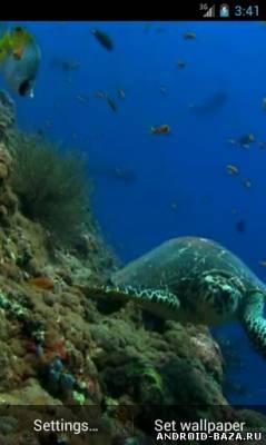 Морская черепаха - Видео обои на планшет