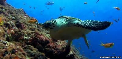 Морская черепаха - Видео обои андроид