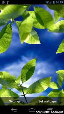 Fresh Leaves - Живые обои на телефон