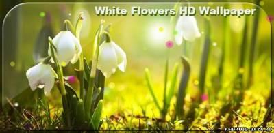 Картинка White Flowers HD Wallpaper Андроид