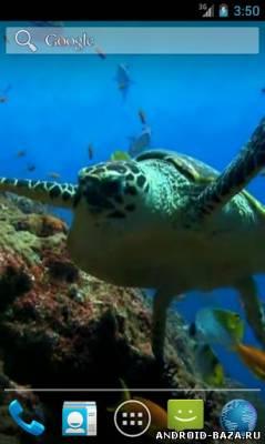 Морская черепаха - Видео обои на телефон