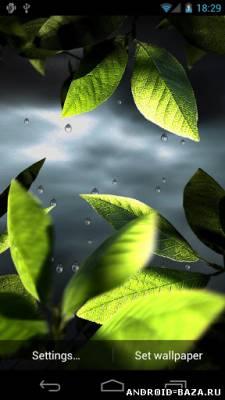 Fresh Leaves - Живые обои на планшет